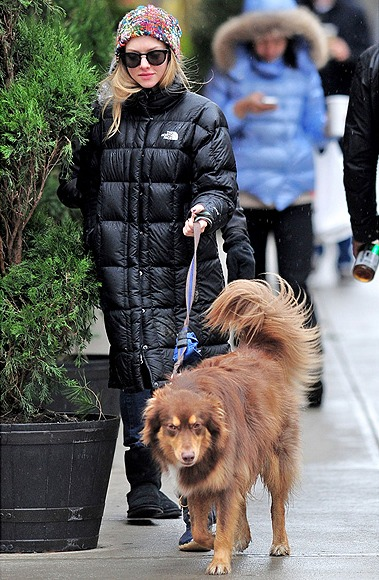 Celebrity Pets: Amanda Seyfried and Australian Shepherd Finn
