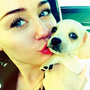 Miley Cyrus and New Puppy Bean