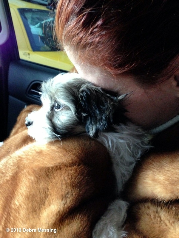 Debra Messing's New Puppy Henry
