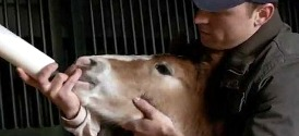 Super Bowl 2013 Commercials: Budweiser Clydesdales