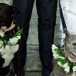 Lake Bell and Scott Campbell's Wedding Party Included 'Dogs of Honor'