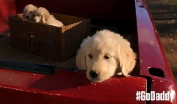 GoDaddy Super Bowl Puppy Commercial 2