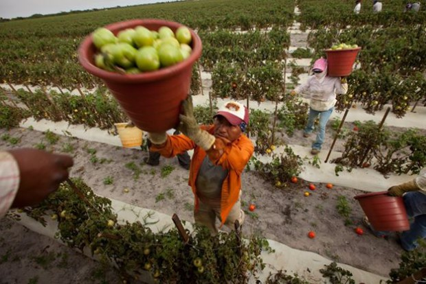 Tomato pickers receive about one penny per bucket of tomatoes.