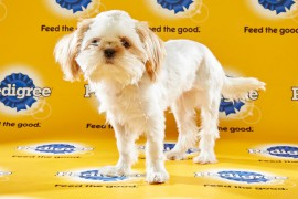 Puppy Bowl 2016 Buttons