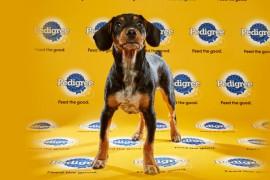 Puppy Bowl 2016 Charlie
