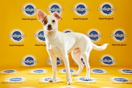 Puppy Bowl 2016 Darby