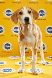 Puppy Bowl 2016 Hank