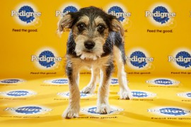 Puppy Bowl 2016 Kevin
