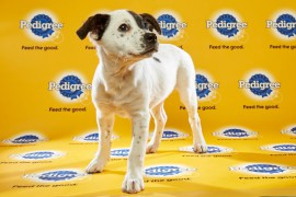 Puppy Bowl 2016 MissSassy