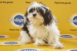 Puppy Bowl 2016 Natasha