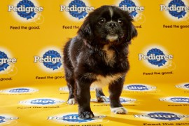 Puppy Bowl 2016 Posey