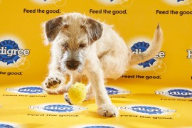 Puppy Bowl 2016 Rugby