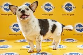 Puppy Bowl 2016 Sailor