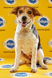 Puppy Bowl 2016 Scout