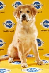 Puppy Bowl 2016 Splash