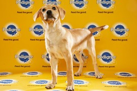 Puppy Bowl 2016 Timber