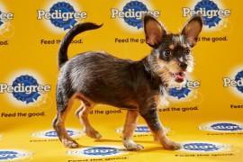 Puppy Bowl 2016 Timon