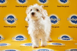 Puppy Bowl 2016 Toby