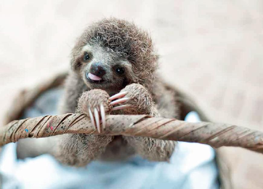slothlove, sloths