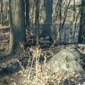 hobbit-woods