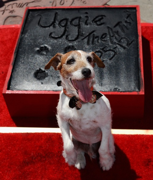 Uggie the Dog at Grauman's Chinese Theater
