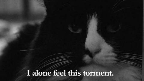 Cat Video Film Festival: Henri 2 Paw de Deux