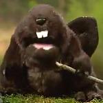 Mint Snuff Beavers