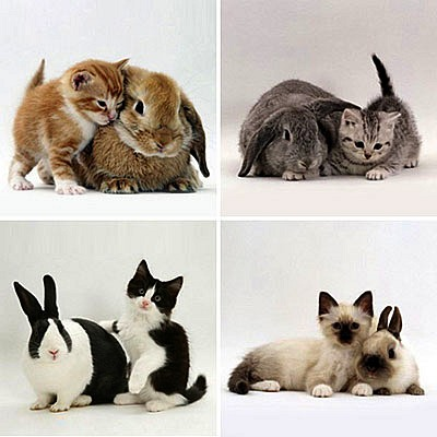 cute kittens and their cute rabbit counterparts