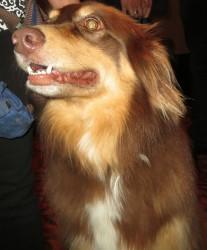 Amanda Seyfried's dog Flynn