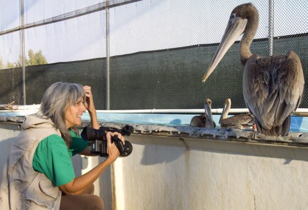 Filmmaker Judy Irving and pelican