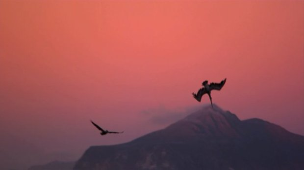 "A pelican performs its balletic dive in ""Pelican Dreams"""