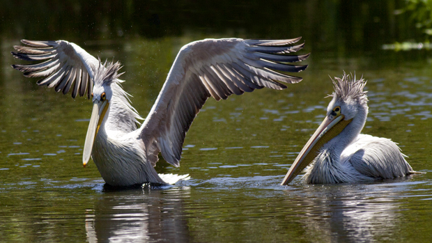 """""""Pelican Dreams"""" documentary review - Reel Life With Jane"""