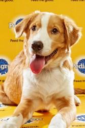 Puppy Bowl 2016 Cooper