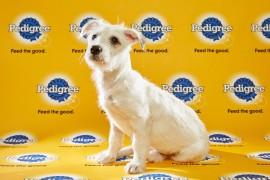 Puppy Bowl 2016 Hailey