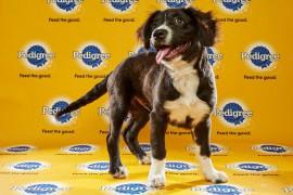 Puppy Bowl 2016 Ranger