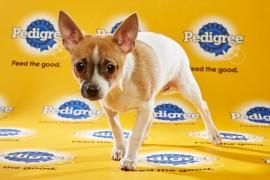 Puppy Bowl 2016 Roxy