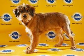 Puppy Bowl 2016 Star