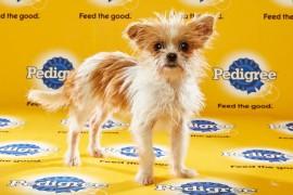 Puppy Bowl 2016 Tidley